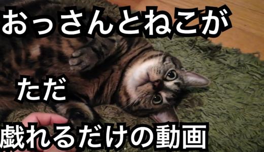 しなまゆ、地球最後の夜にrelease party「ネコちゃんワンちゃんいっぱいぎゅー!」